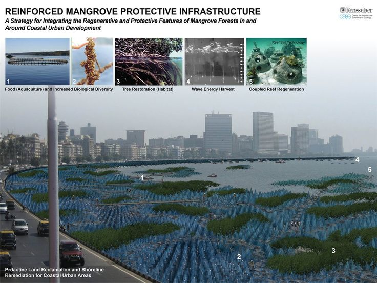 This project addresses a strategy to strengthen mangrove forests along coastlines to reinforce the natural protection of the coastal communities against the threat of tsunamis. This issue with global relevance is taken up with Miami as a case study. The project shows the high capacity of the plant structure to break down the wave's energy in comparison to vertical walls.