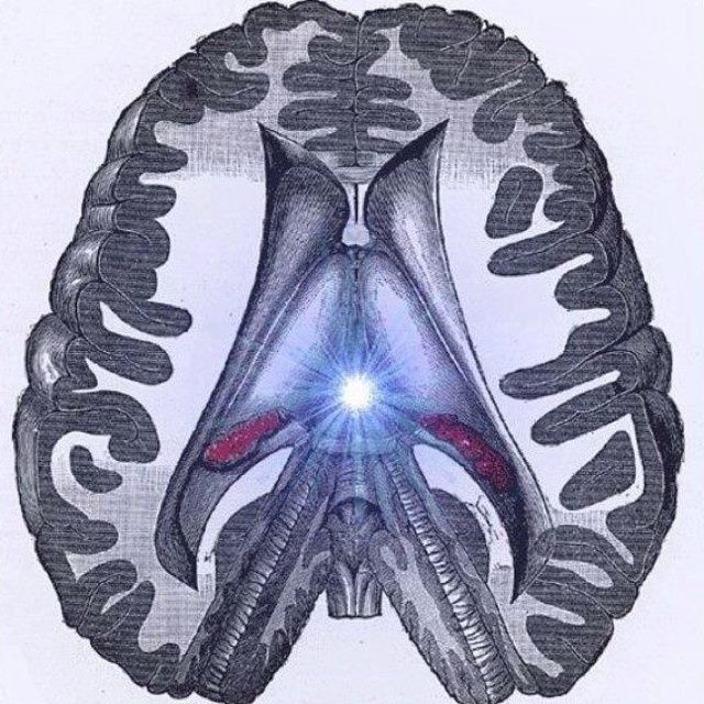 Pineal Gland and its usage      pineal gland/third eye
