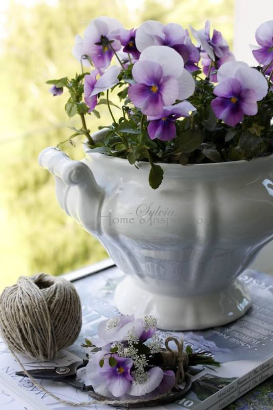 Hey there ladies, beautiful boaed as always , for tonight and  tomorrow lets do a Purple Pansy Cottage, Thanks gals ♡