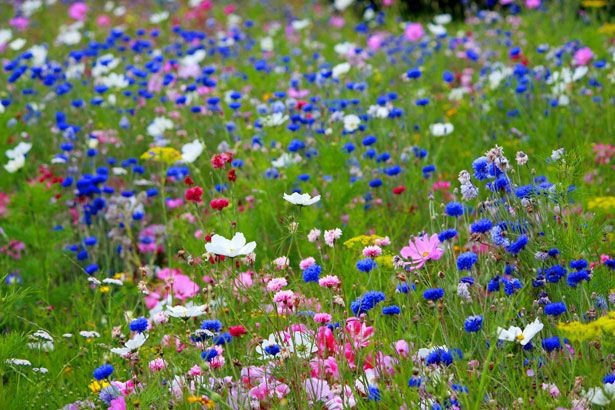 wild flowers | Wild Flowers Free Stock Photo - Public Domain Pictures