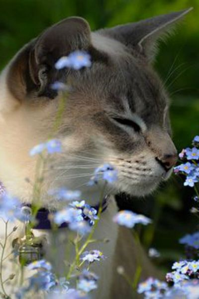 ...Time to Smell the Flowers...