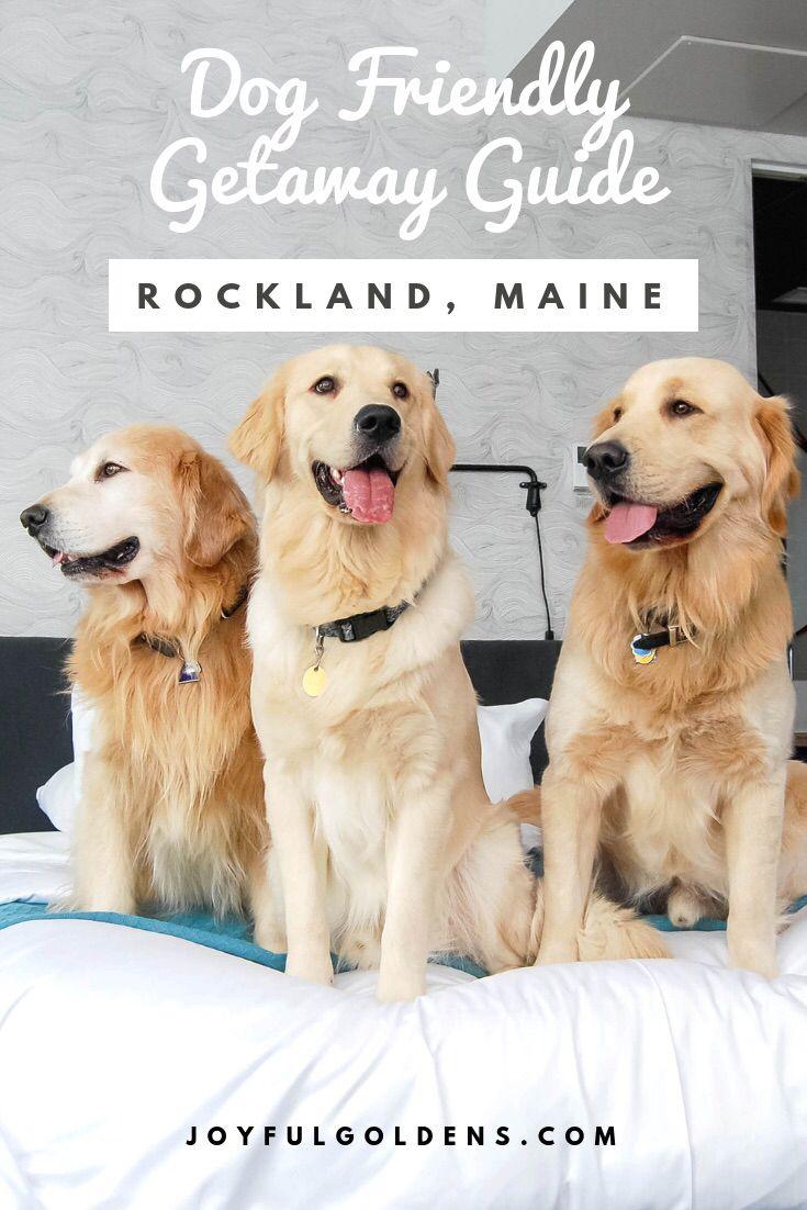 250 Main Hotel Joyful Goldens Pet Friendly Hotel In Rockland
