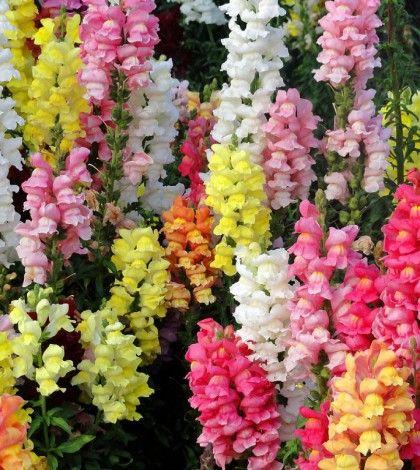 Y llegó la primavera, cargada de maravillas en flor, de colores, de aromas y una brisa cálida y fresca a la vez que aunque desaten alergias, no puede evita