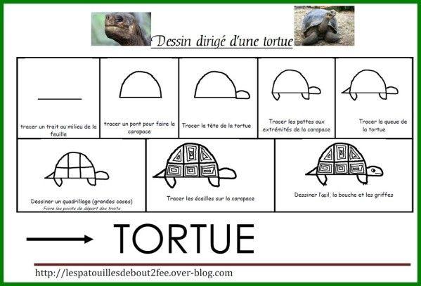 Encore un dessin dirigé (mon dada !)...celui d'une tortue terrestre. Reproduire le dessin et dessiner la carapace