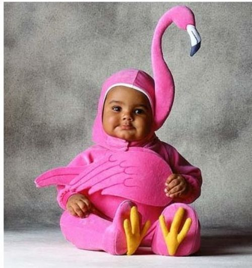 How awesome is this baby and flamingo costume?  Too, too cute!