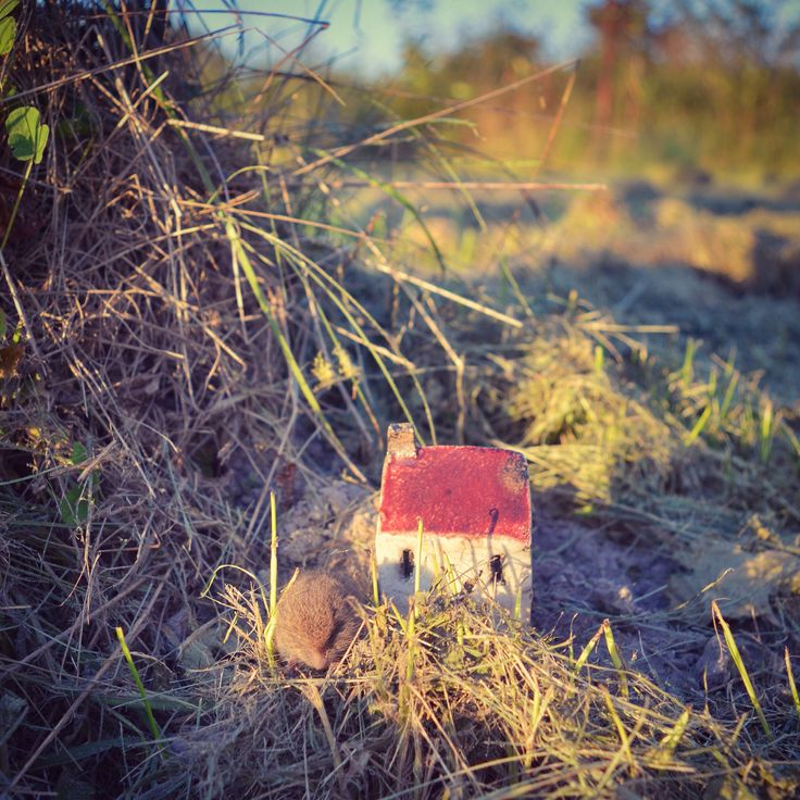 Fields in #brodyiłżeckie little #raku #house and a little #field #mouse #meadows #poland  #clay #ceramics #domek