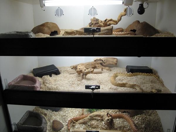 Gopher Snake Enclosure Pets Herp Stands And Racks