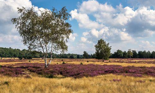 Die Niederlausitzer Heidelandschaft