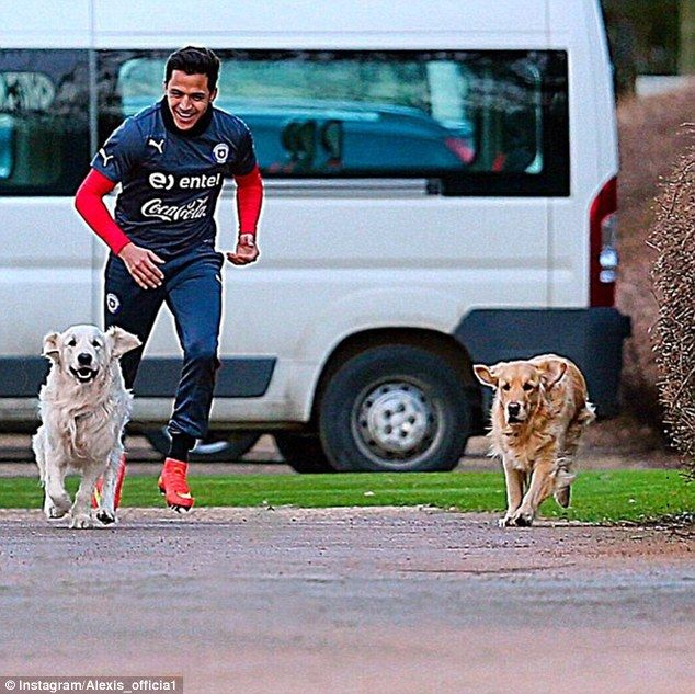 The Chile star joined his two dogs for a jog around Arsenal's London Colney base ahead of ...