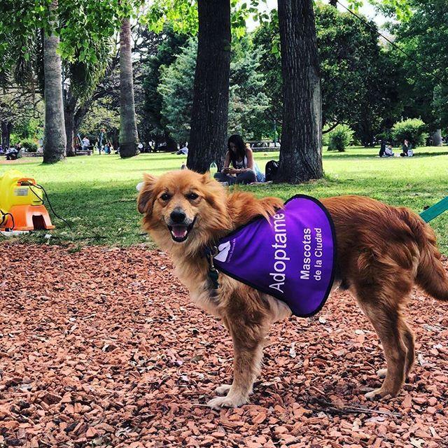 Compartiendo una nueva jornada de adopción junto a @bamascotas en el Parque Carlos Mugica. Vení a pasar un hermoso día y adoptar al nuevo integrante de la familia ❤️🐶❤️ •  #adoptanocompres #adopcion #mascota #perro #dog #ayudar #instadog #instapet #lovepets #adopta