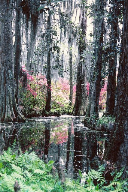 30 Best Images About State Of South Carolina Usa On Pinterest Cabbages Charleston Sc And