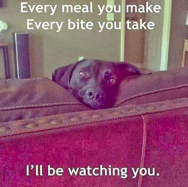 I Ll Be Watching You Funny Animals Dog Puppy Beg Dog: 87 Best Meme Images On Pinterest