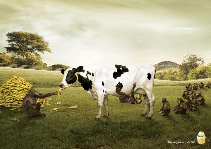 Binggrae Banana flavored milk: Farm