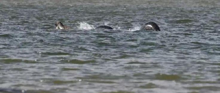 Monstre du Loch Ness : la nouvelle photo qui donne des frissons