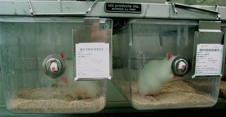 Dites à Kikkoman d'arrêter de tuer des animaux pour vanter les vertus de leur sauce soja sur la santé | Agissez | PETAFrance.com - 1