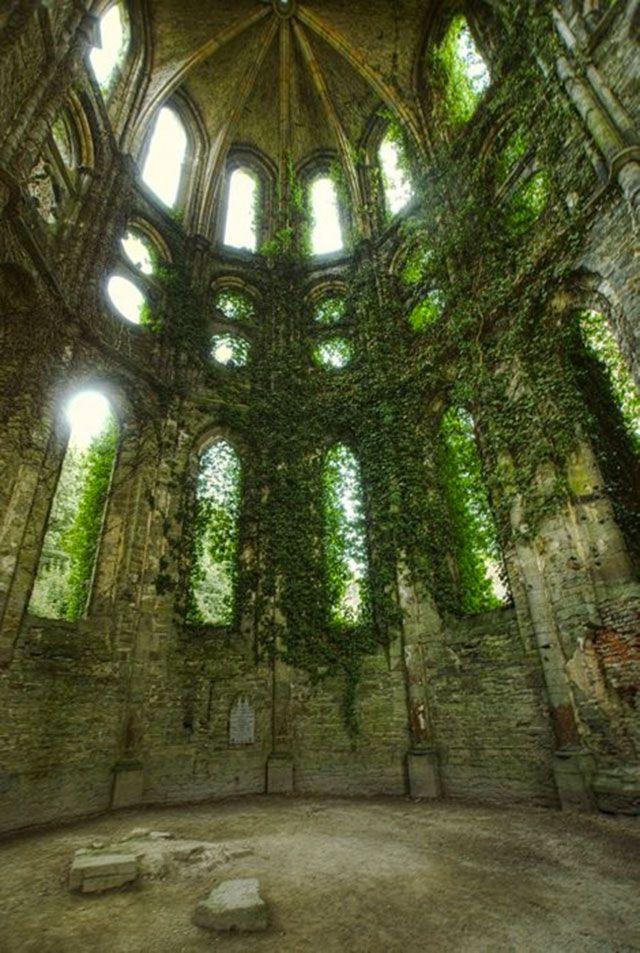 Bélgica- Ruinas, la hiedra- por John Neville Cohen