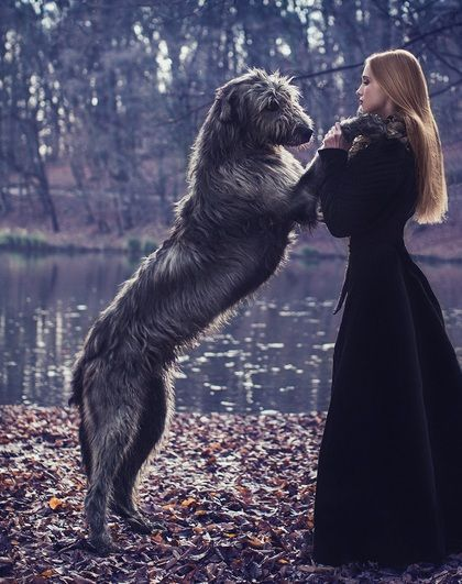 We'll be getting one of these (Irish Wolf Hound) aaand a Great Dane.  Both of course are larger then me haha