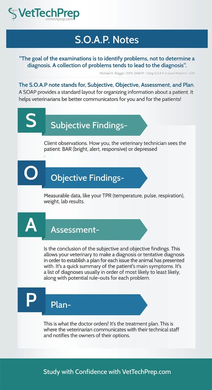 Infographic S O A P Notes Vet Medicine Vet Tech Student