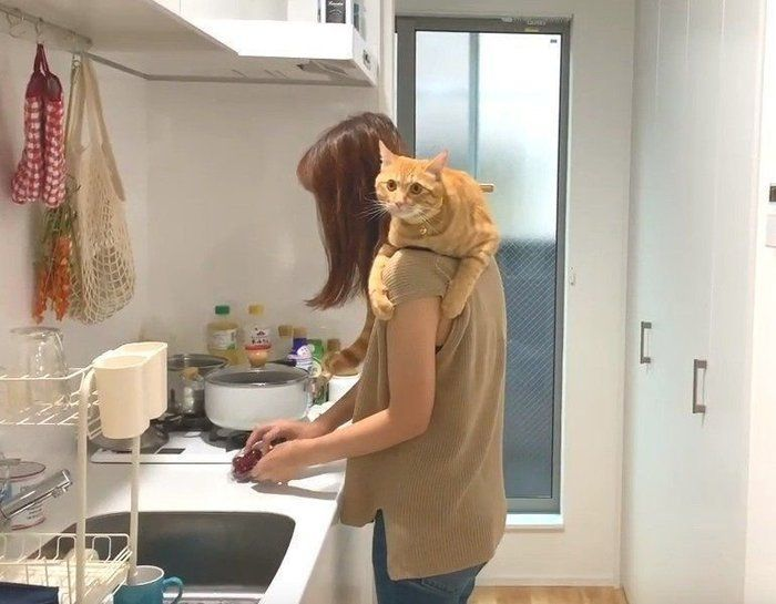 肩乗り猫現る 毛づくろいまでしてくれて至れり尽くせり ねこのきもちweb Magazine 猫 子猫 毛づくろい