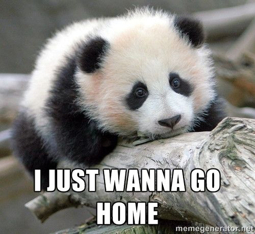 I just wanna go home - sad panda | Meme Generator