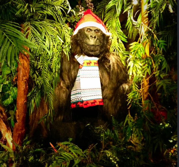 Even Gorilla Mountain gets chilly at this time of year! http://www.therainforestcafe.co.uk/christmas.asp