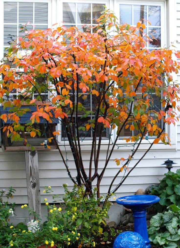 Garden Ideas Michigan 22 best northern michigan native plants images on pinterest