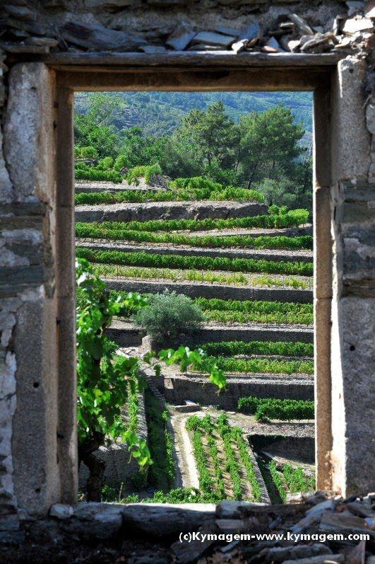 Douro valley - Portuguese landscape - #PortWine vineyards