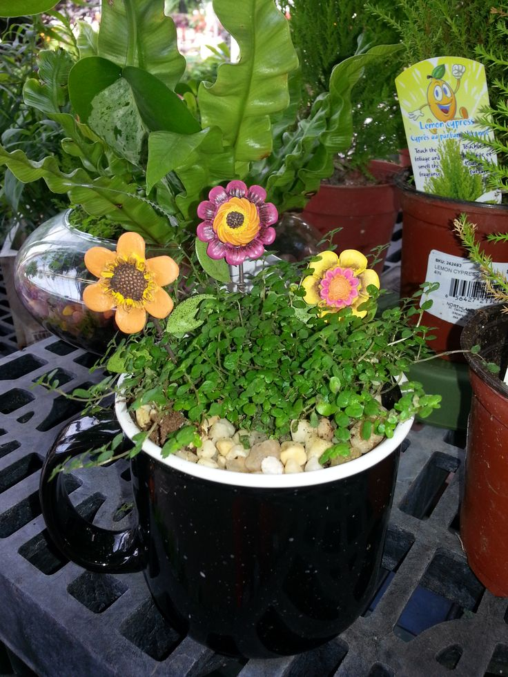 #Terrarium In A Cup With Fairy Garden Flowers From Stauffers Home U0026 #Garden  Store