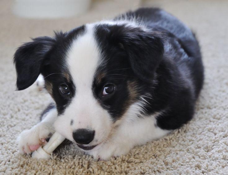Skottipanimolta+etu+uuden+koiran+ottaneille+työntekijöille:+Viikko+palkallista+vapaata
