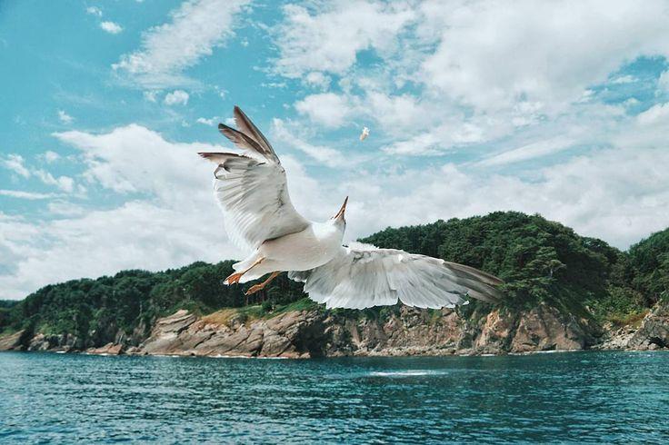 That's my foooo...d! . Dari sejak tinggal di Sydney mengambil foto Burung Camar adalah salah satu kegiatan favorit saya . Dan waktu ke Jepang musim panas ini saya senang karena ada kegiatan yang bisa membuat saya bertemu dan mengabadikan mereka . Yang ini saya sedang berada di Jodogahama untuk berlayar melihat pesisir pantainya. Awalnya saya kira ini hanya akan menjadi kegiatan berlayar yang biasa. Namun ternyata tidak . Pelayaran ini menjadi makin menyenangkan ketika ada ribuan camar…