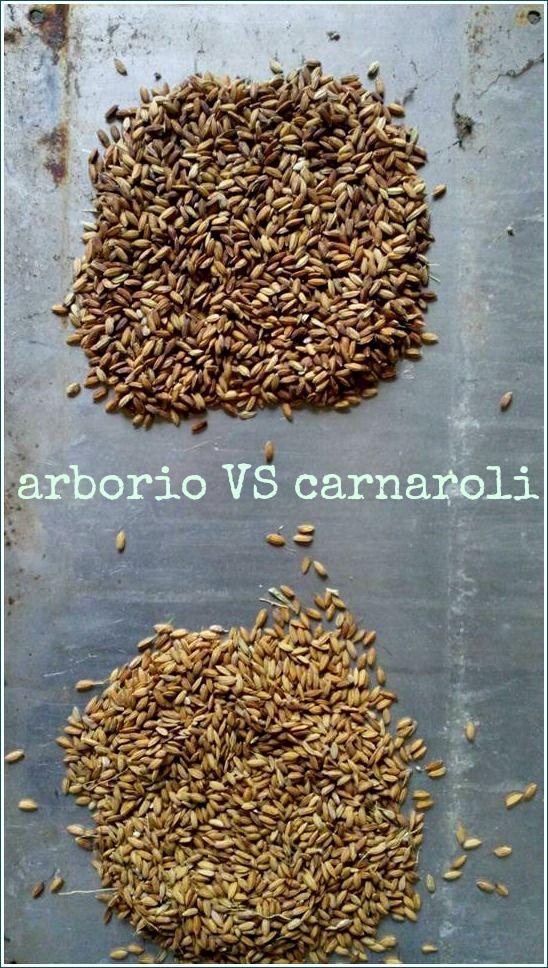 Arborio VS Carnaroli Quale preferite per i vostri risotti?! Cremoso e vellutato o consistente dal chicco ben separato?