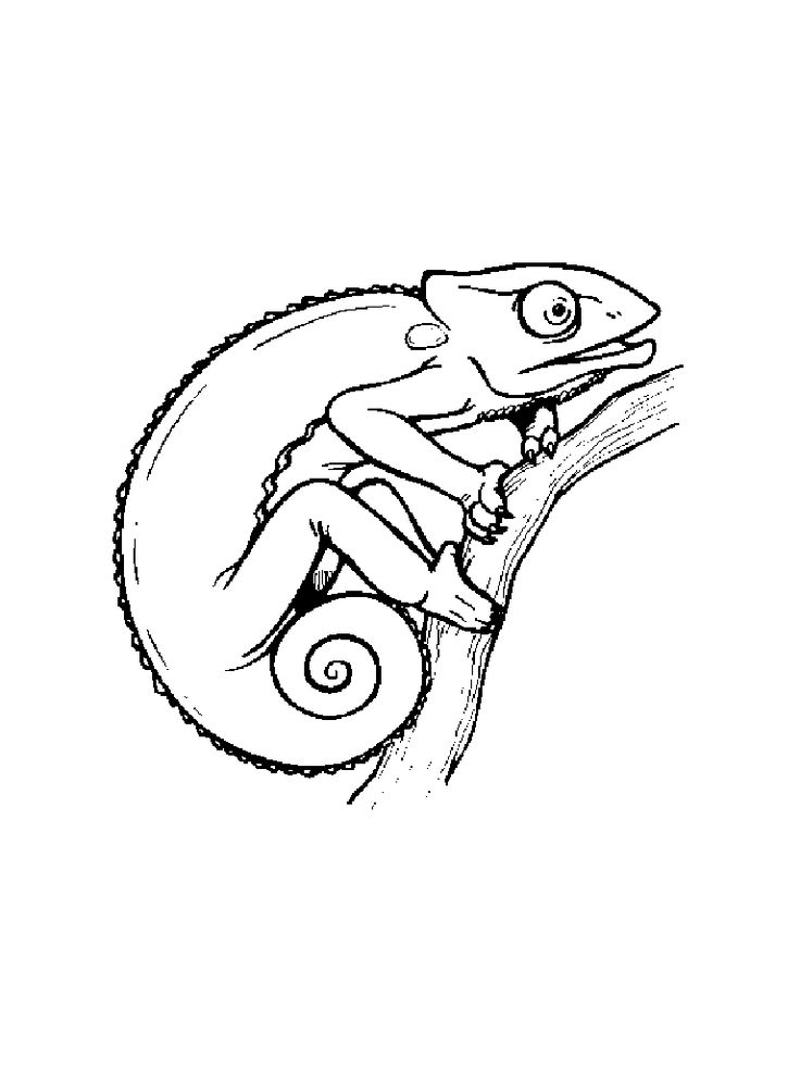 17 best images about chameleons for creative coloring on pinterest free printable coloring
