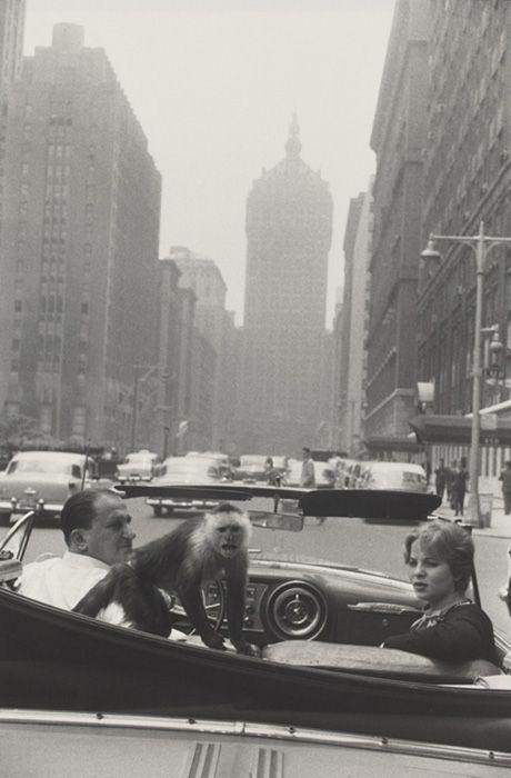 """Park Avenue, New York ........Du 14 octobre 2014 au 08 février 2015  """"Le Jeu de Paume"""" à Paris présente la première rétrospective, depuis vingt-cinq ans, du grand photographe américain Garry Winogrand (1928-1984). Chroniqueur célèbre de l'Amérique de l'après-guerre."""