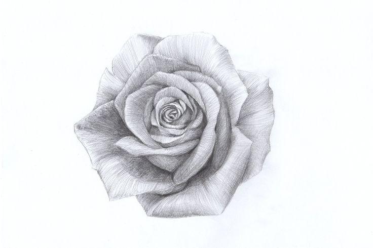 Rose by Lelixiana