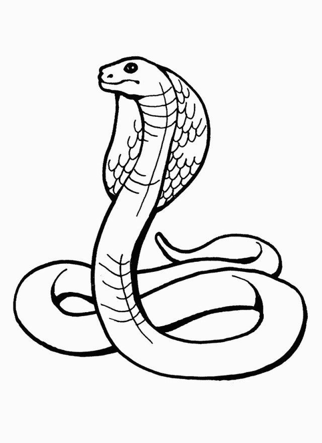 27 Great Photo Of Snake Coloring Page