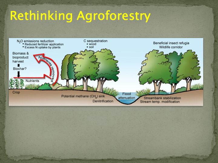 Agroforestry's many different applications can improve water quality, improve livestock health and offer diversity of income among other benefits. Slide courtesy of the USDA's National Agroforestry Center.