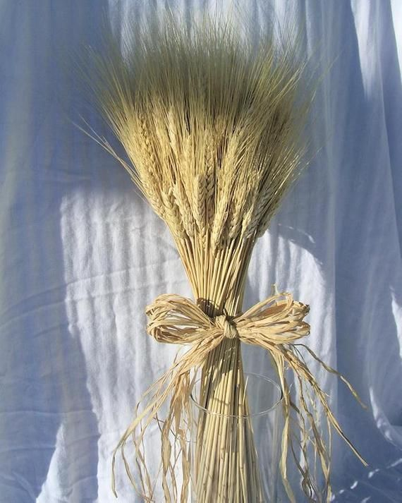 8 Oz Blonde Wheat 60 Stems Wheat Wheat Bunches Wedding Decor Wheat Bouquet With Images Dried Flowers Flower Arrangements Flowers