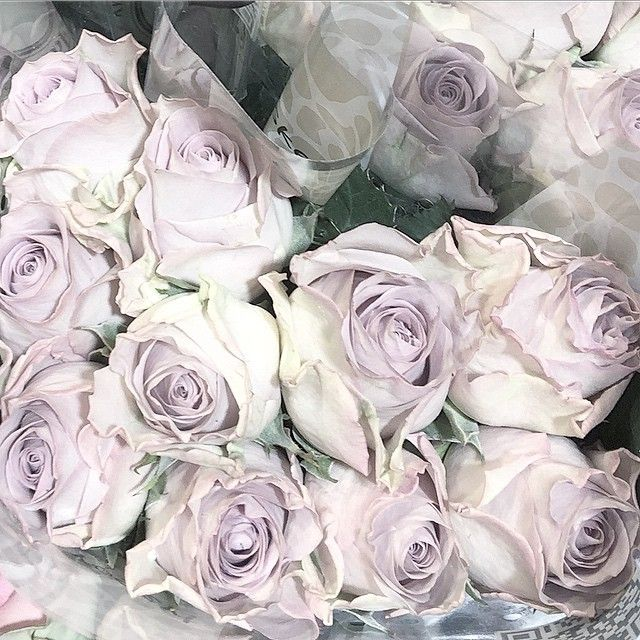 Floral. noeblog.com