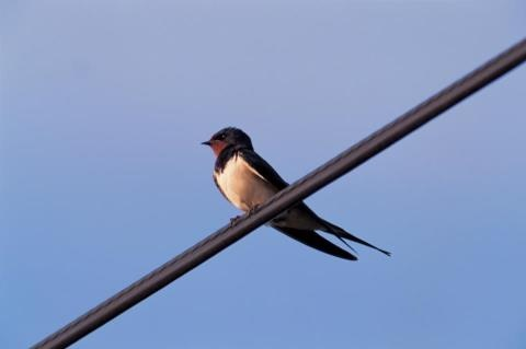 I am really looking forward to the Swallows arriving this year