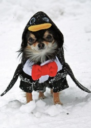 OMGAnimal Costumes, Halloween Costumes, Small Dogs, Dogs Costumes, Pets, Bebe Doggie, Penguins, Costumes Ideas, Smalldogs