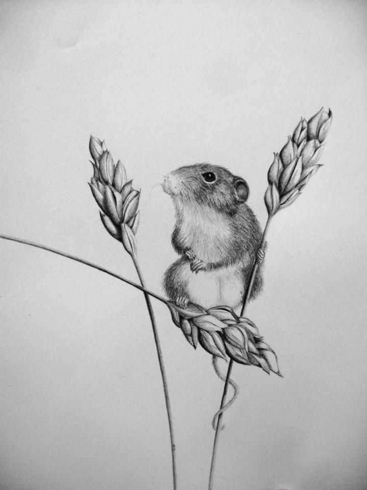 Little field mouse in pencil by ~30030610 on deviantART