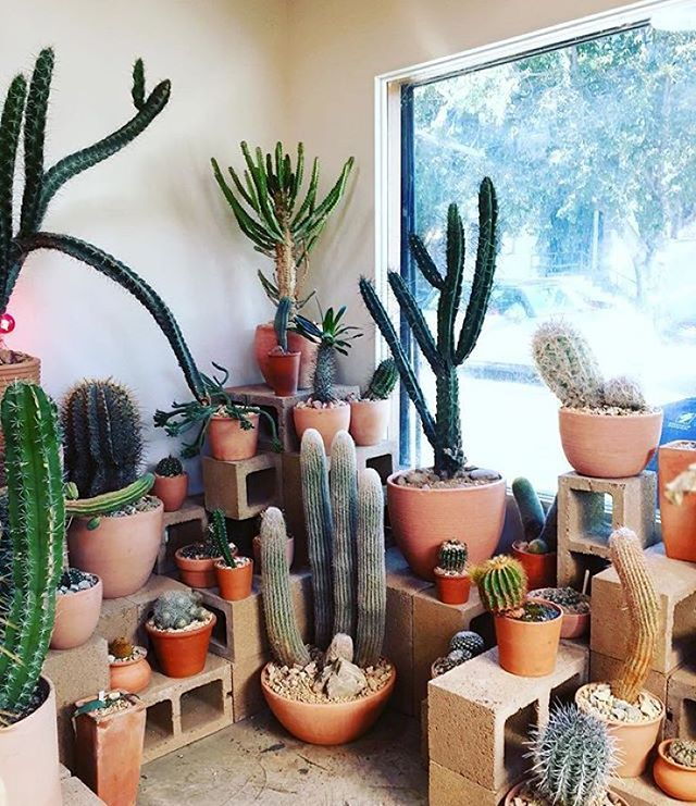 @hotcactus_la is my happy place!  Regram from @justinablakeney