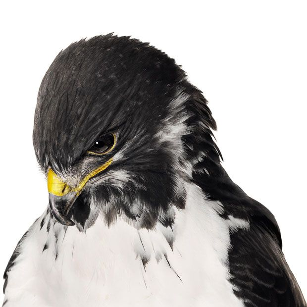 Bird by Andrew Zuckerman: high-definition pictures of birds captured against a   white background.