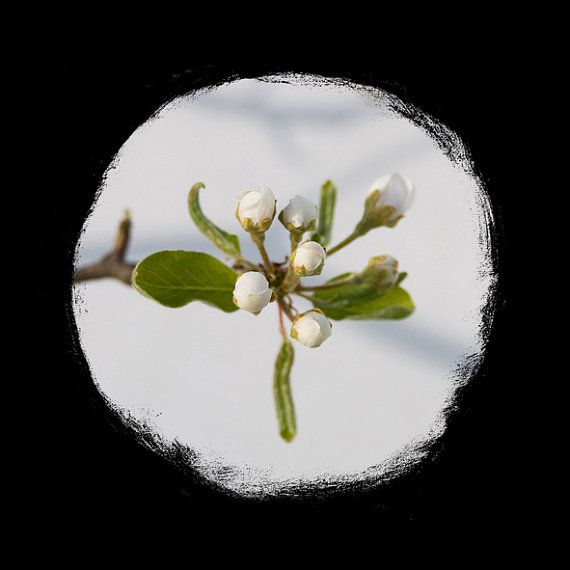 Pyrus Argenteo, ready to hang, gift, nature, photography, black wooden frame, passe-partout, circular, round,  white, green, nature, Italy  https://www.etsy.com/listing/204401518/pyrus-argenteo-ready-to-hang-gift-nature?ref=shop_home_active_3