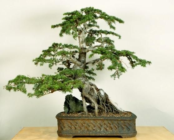 381 best images about beautiful penjing penzai bonsai for Cypress gardens mural