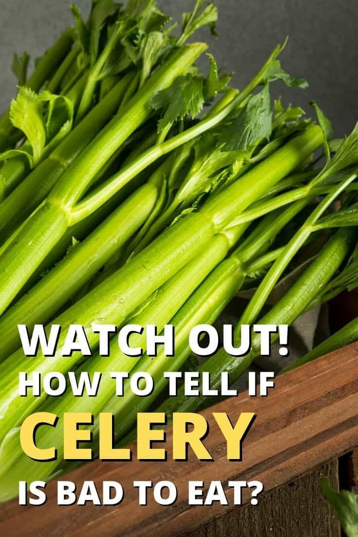 Does Celery Go Bad How Long Does Celery Last In Fridge Celery Food Shelf Life How To Store Celery