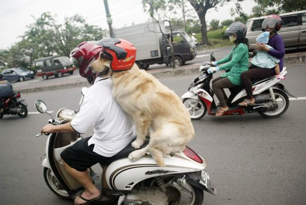 carrying you walk around by motorbike #Cute
