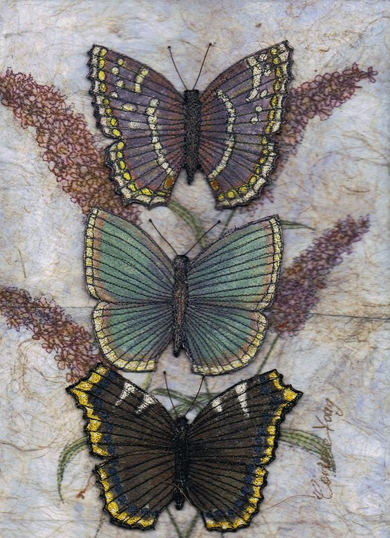 Butterfly Collection 1 Corinne Young