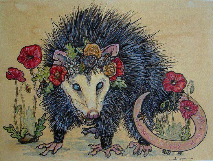 78 Best Possum Art Of The Opossum Images On Pinterest