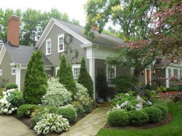 low maintenance curb appeal - boxwood, cedars, hostas, hydrangeas .